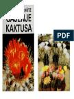 Fleischer Schütz - Gajenje Kaktusa