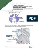 20._estructura__de_la_hoja.pdf