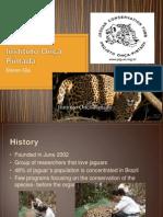 Instituto Onça Pintada - Steven Gia.pptx