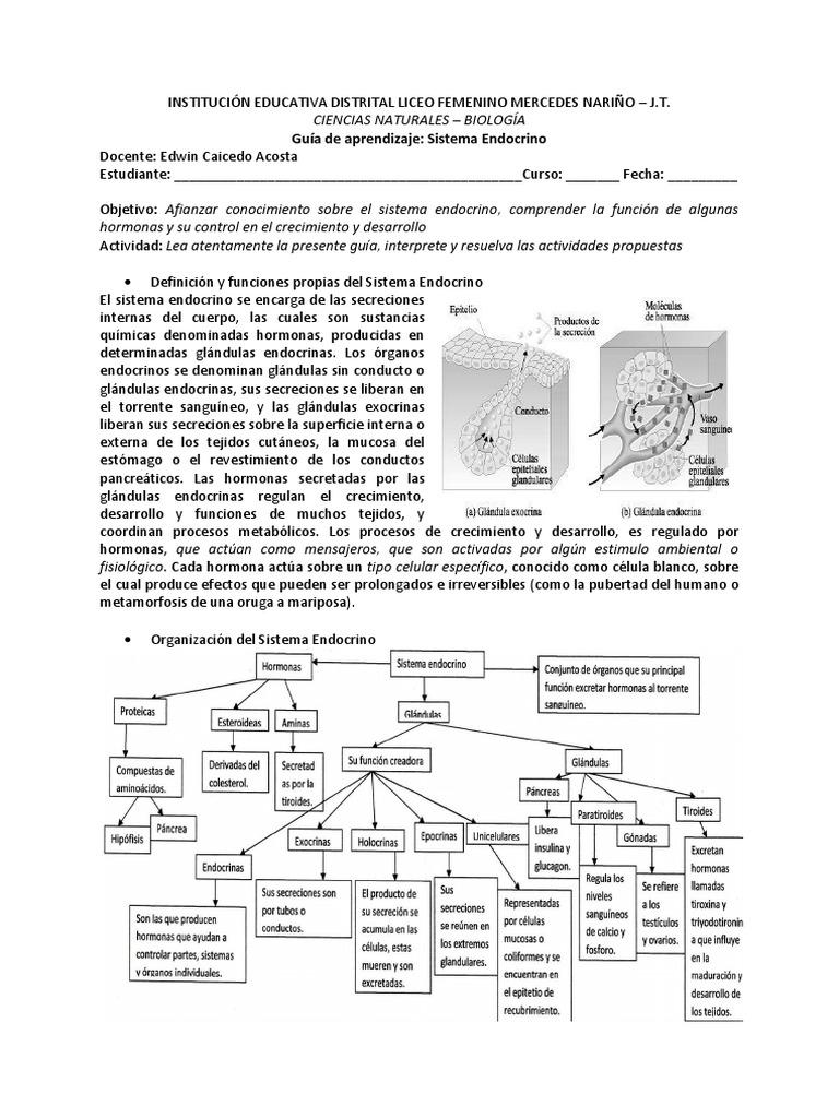 Guia_Sistema_Endocrino.pdf