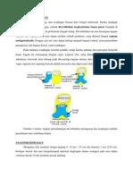 Makalah Embriologi, Fisiologi, Histologi, Anatomi Esofagus