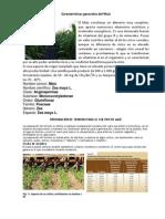 Características generales del Maíz.docx
