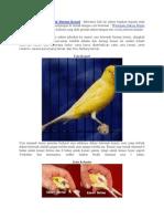 Tips Cara Sukses Beternak Burung Kenari