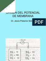 3 ORIGEN DEL POTENCIAL DE MEMBRANA.ppt