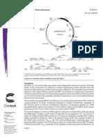 PmCherry-C1 Vector Information