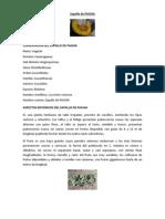 Zapallo de PACHIA.docx