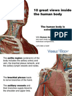 Anatomy Atlas Preview
