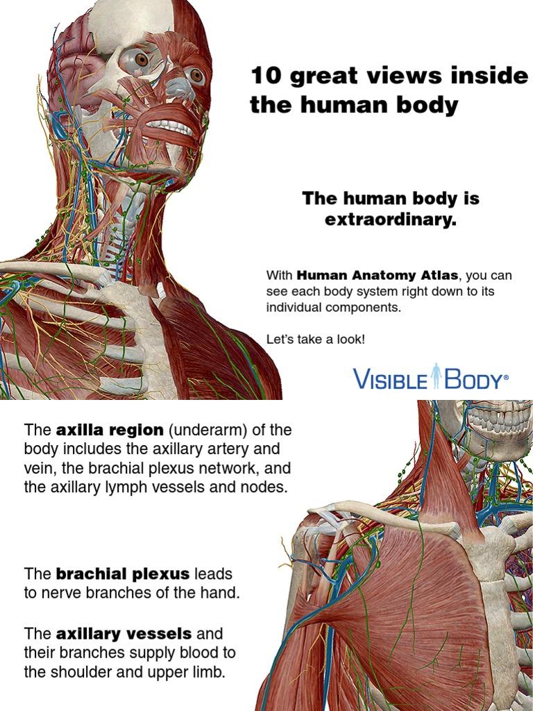 Tolle 3d Anatomie Software Für Pc Galerie - Anatomie Ideen - finotti ...