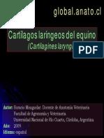ANATOMIA - CARTILAGOS LARINGEOS del equino.pdf