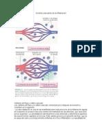 Eventos vasculares de la inflamación.docx
