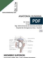 Clase Anatomia Humana.pdf