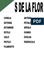 CAROLA ESTIGMA.docx