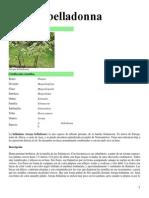 Atropa belladonna.docx