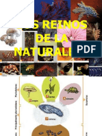 REINOS DE LA NATURALEZA 6º.ppt