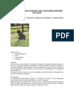 inmunodeficienciafelina1 homeopatia.doc