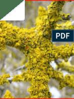 Lichen Mushrooms-Champignons Lichens