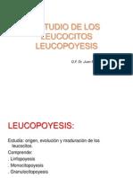 1. PARREÑO ESTUDIO DE LOS LEUCOCITOS. LEUCOPOYESIS PATOLOGIA.ppt