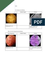 laporan praktikum anatomi dan perkembangan tumbuhan
