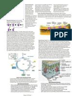 Bio 20 Photosynthesis Curriculum