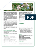 ficha_mirtilo.pdf