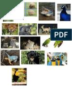 animales en especie de extincion.docx
