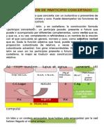 EL PARTICIPIO CONCERTADO Y EL ABLATIVO ABSOLUTO.doc