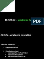 C1 - Anatomia Renala