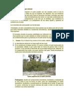 Minerales del Suelo.docx