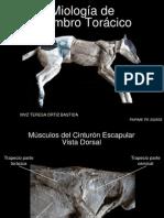 MIOLOGIA MIEMBRO TORACICO.pdf