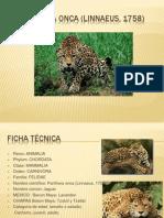 Panthera onca (Linnaeus, 1758).pptx