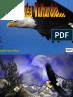 Renasterea Vulturului MCZA.pps
