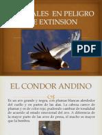 CONDOR.pptx