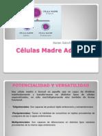Células Madre Adultas.pptx