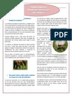 COMPORTAMIENTOS-CABALLO.pdf