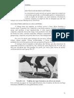 Parte_4_-_Bovinos_leiteiros.pdf