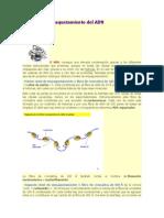 condensacion del adn.docx