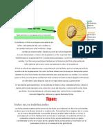 biologiacuartofruto-130227015455-phpapp02.docx