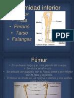 Extremidad inferior anatomía y fisiología.pptx