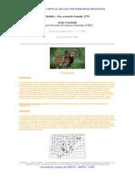 muflón.pdf
