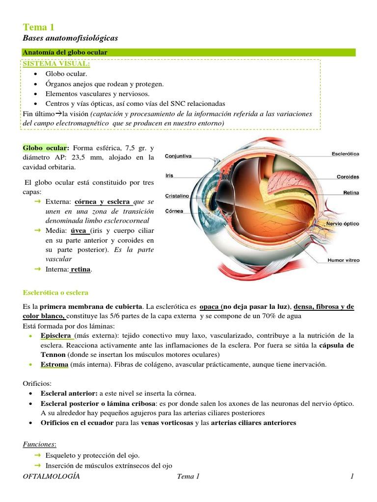 Tema 1 Bases anatomofisiologicas. Tema 1.1. Anatomofisiología del ...