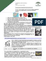1 CT_0303_contenidos.docx