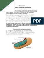 Mitocôndrias.docx
