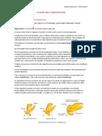 TUBO DIGESTÓRIO E CAVIDADE ORAL (TRANSCRIÇÃO DA AULA).docx