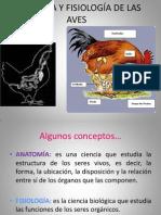 869893711.ANATOMÍA Y FISIOLOGÍA DE LAS AVES.ppt