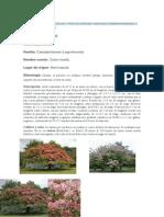 CONSEGUIR LA INFORMACIÓN DE 3 TIPOS DE ESPECIES VEGETALES CORRESPONDIENTES A LOS SIGUIENTES GRUPOS.doc