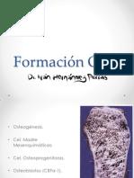 Formacion Osea (osteogenesis)