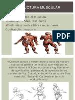 anatomia presentacion b.pptx