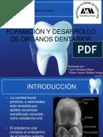 Odontogenesis(3).ppt