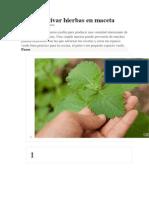 Cómo cultivar hierbas en maceta.docx