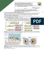 BIOLOGIA GUIA 1 LA CIRCULACION EN SERES VIVOS.doc
